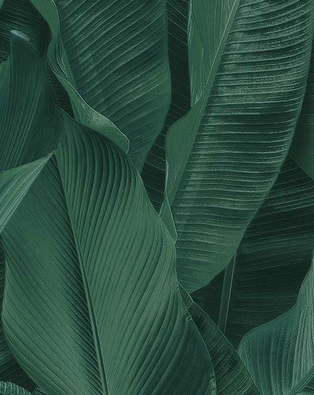 carta da parati aldo verdi milano